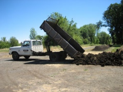 Dumping load of manure